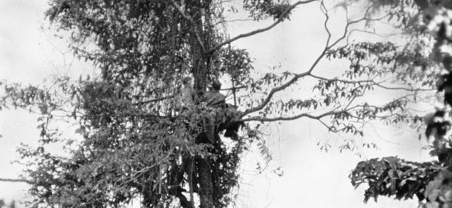 This rare photo of coastwatchers in action depicts a pair of these intrepid spies occupying an observation post in a tree on New Guinea. The information provided by coastwatchers during Allied campaigns in the Pacific proved quite valuable. However, the coastwatchers paid a heavy price while performing their hazardous duty.
