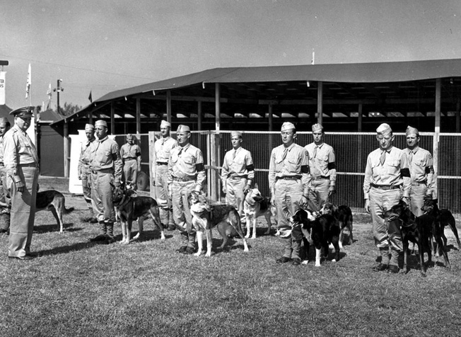 War dogs and their handlers stand ready for inspection during training. Thousands of families across the United States offered their animals as dogs to be trained by the military for the war effort.