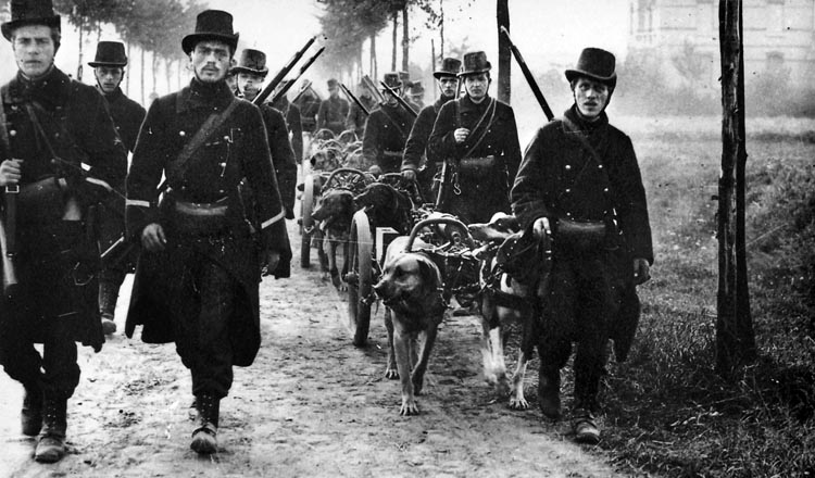 Belgian carabineers with dog-drawn machine-gun carts move up to the front in late August.