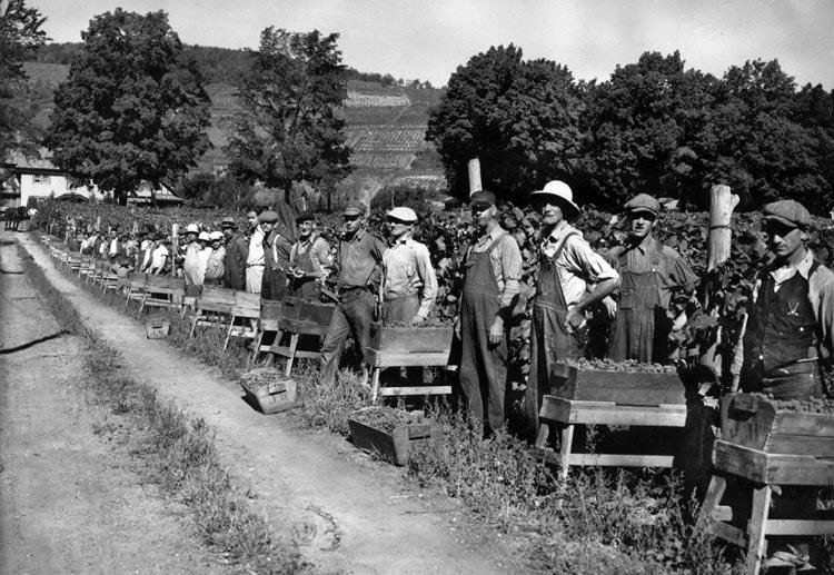 nazi pows