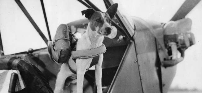 The fox terrier 'Salvo' prepares for a drop over England. Military dogs played a key role in morale and companionship throughout the war.