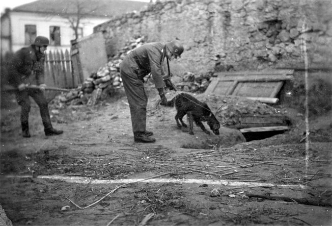 German soldiers use a dog to search for partisans near the front lines in Russia. The Germans also employed dogs with the guards at their infamous concentration camps.