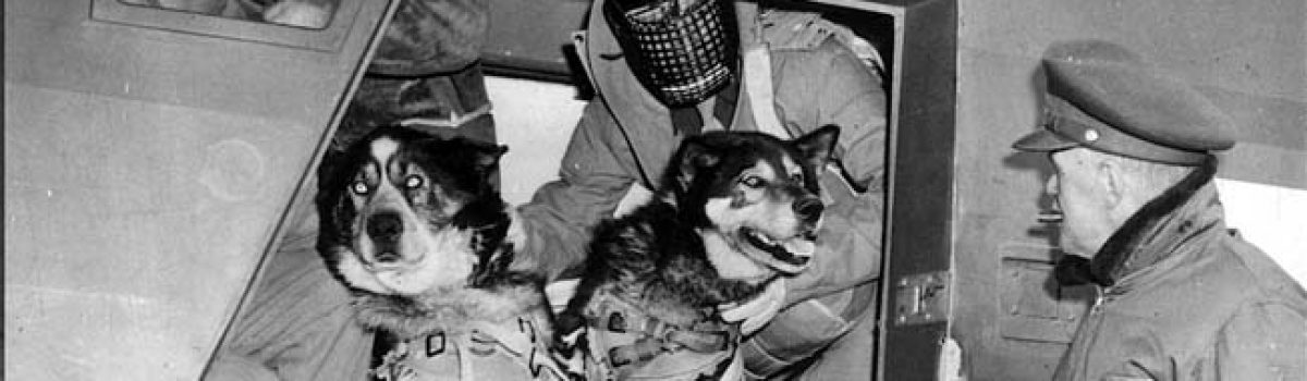 Raining Dogs! U.S. Army Parachute Animals in World War II
