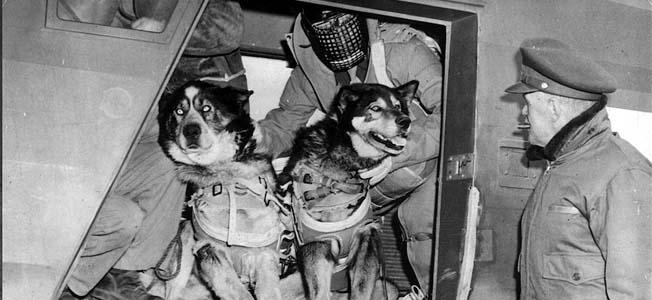 Canine Parachute Teams