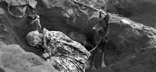 Butch the doberman pinscher stands watch while his handler, U.S. Marine Private Rez Hester, sleeps on the embattled island of Iwo Jima. War dogs were responsible for saving countless lives during World War II in the Pacific.