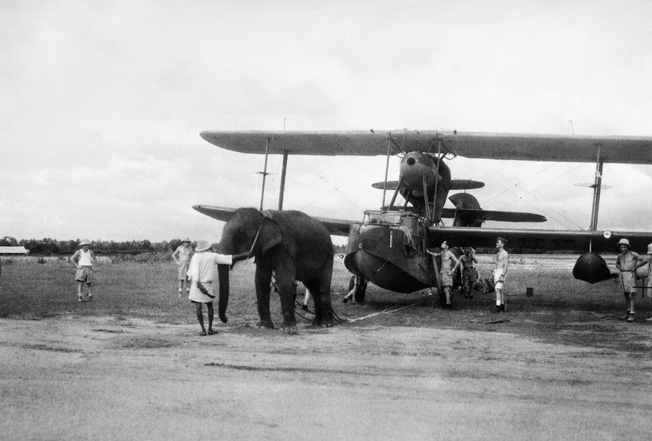 An elephant pulls a Submarine Walrus into position at a Fleet Air Arm station in India in June 1944.