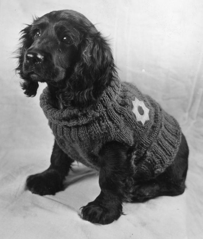 """Known for being the best-dressed canine on the post, """"Black Pepper"""" was the mascot of Enl. Det. 1861st Unit. Black Pepper could often be seen out for his early morning exercise under the supervision of P.F.C. Joe Frisella. His sweater, bearing the insignia of the Eighth Service Command, was knitted by Mrs. P.N. Wells of Little Rock, Arkansas."""