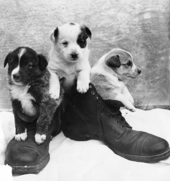 These military boots insulate a different set of dogs: couresty of the 9th Svc. in Fort Douglas, Utah.