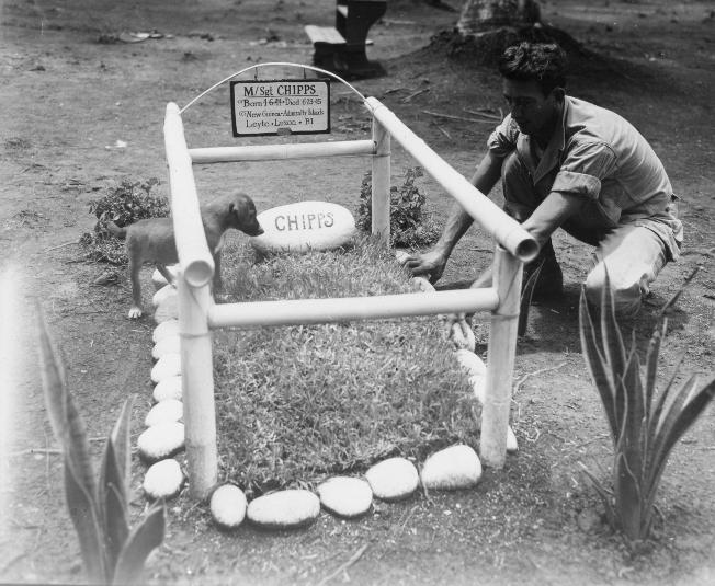 """This photo depicts P.F.C. Joseph Samson of the 1st Signal Troop, 1st Cavalry Division at the """"grave"""" of his pet dog, """"Sergeant Chipps,"""" while Chipps looks on with interest. The grave served as a memorial to the four campaigns on which Chipps accompanied the 1st Signal Troop."""