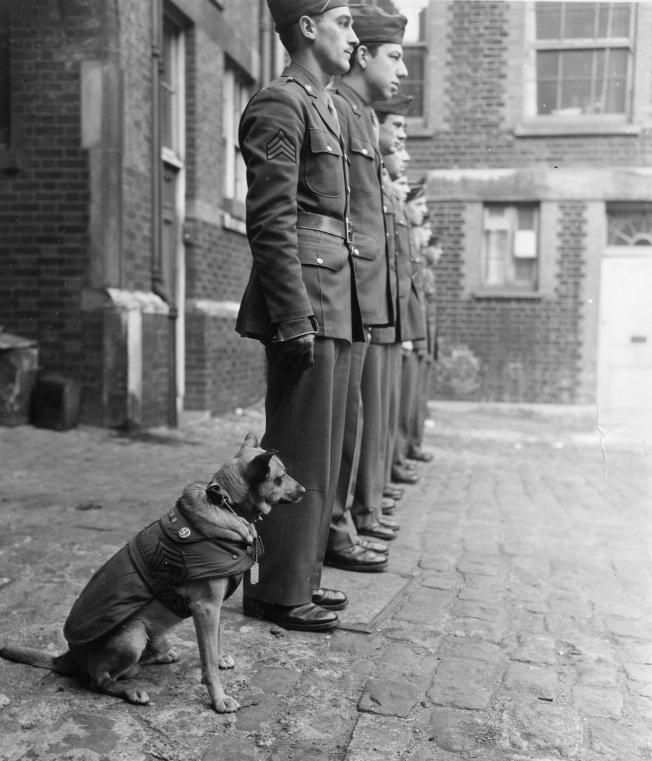 """Sgt. Joe Kodachrome, or """"Sgt. Joe"""" to the men in his outfit, falls in at attention with the rest of his group. Dog tags polish, resplendant in his G.I. coat, his uniform is complete with an ETO ribbon. Prior to this picture, Sgt. Joe completed a full year of active duty and jokingly awarded the """"order of spam"""" for his meritorious service."""