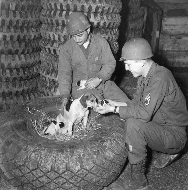 A tire shortage begrudgingly coaxed the mascot of the 766th Light Main, 56th Division, out of her temporary quarters where she just had a litter of pups. To the left and right are Cpl. Joseph Gabriel and Sgt. Troy Greene, respectively, inspecting the unit's newcomers.