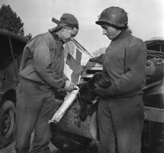 """In serving with the Allies, military mascot """"Lucky"""" proved to be anything but. After sustaining a fractured leg in Belgium, Corporal Jerry Byars fixes him up with a splint. Byars, a former veterinarian, is seen here serving with a cavalry reconnaissance squadron of the VII Corps. Looking on is Sgt. Fred Lederman of Newark, New Jersey."""