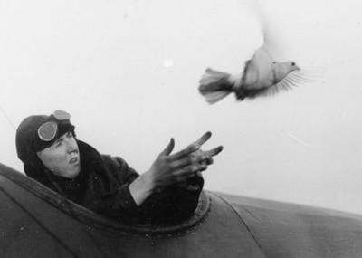 Warfare's Unsung Pigeon