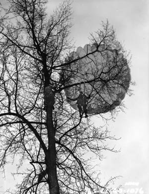 A paratrooper climbs a tree to help cut a lucky buddy out of his parachute. Other paratroopers were not so lucky and were killed or captured by the enemy while hanging helpless.