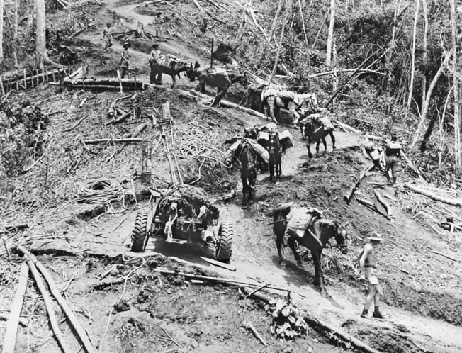 Australian troops and heavily laden pack animals move along the muddy, winding Kokoda Trail into the Uberi Valley, October 1942. During the New Guinea campaign, the terrain and environment decimated both sides.