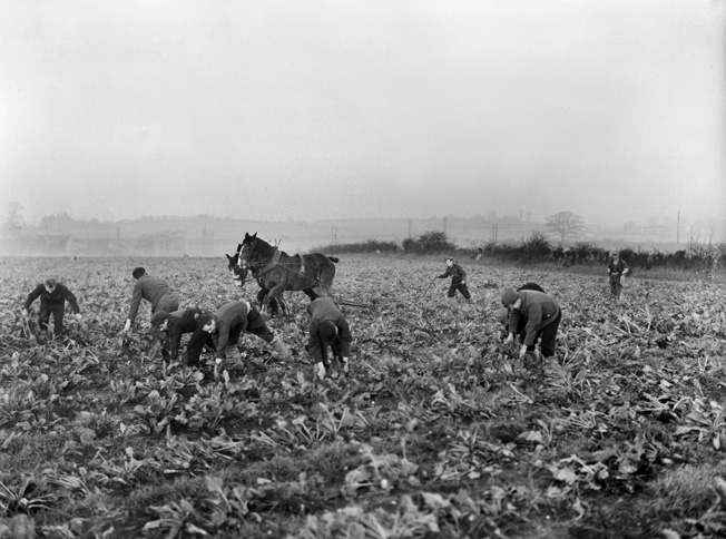 German POWs pick crops on a British farm near their camp, late 1945, months after the war ended. Many German and Italian prisoners transported to the United States also performed such work, for which they were paid. Some, like Engler, chose to remain in, or return to, the country where they had been imprisoned.