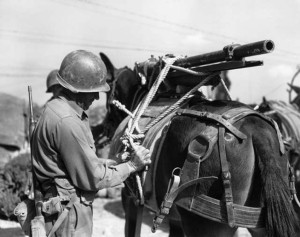 Soldiers adjust the straps that secure a machine gun to the back of a mule for transport.