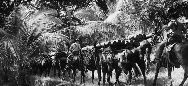 1940, Panama --- Missouri Mules, loaded with four powder cartons each on specially constructed pack saddles, are starting the strenuous trek to the high points of the islands guarding the approaches to the Panama Canal. --- Image by © Hulton-Deutsch Collection/CORBIS