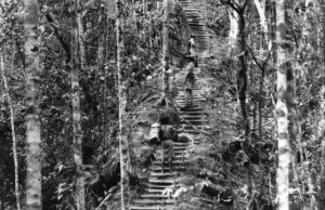 Native porters carry gear and ascend the Golden Stairs of the famed Kokoda Trail along with an Australian soldier.