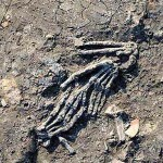 Severed Hands: Trophies of War in New Kingdom Egypt
